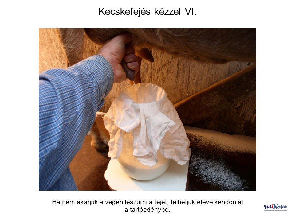 Kecskefejés kézzel VI.