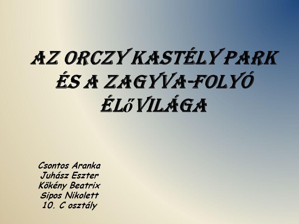 Az Orczy kastély park és a Zagyva-folyó élővilága