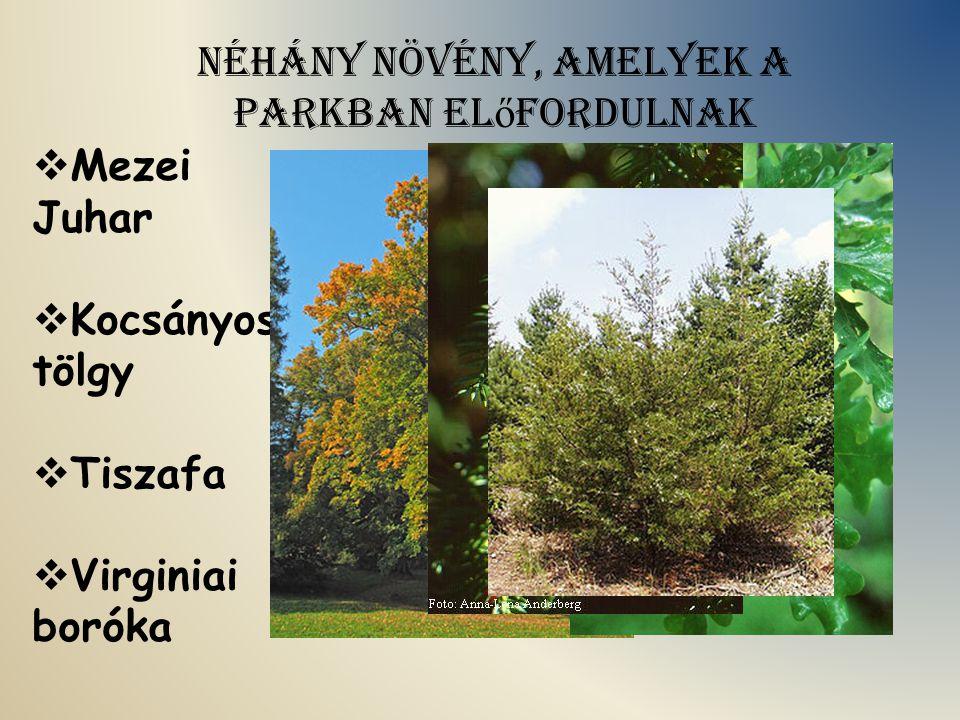 Néhány növény, amelyek a parkban előfordulnak