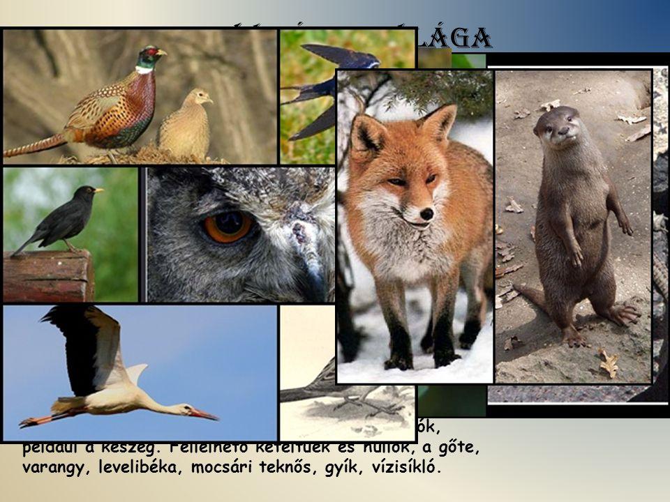 A Zagyva állatvilága