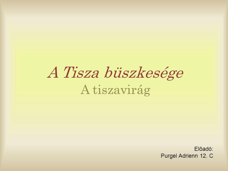 A Tisza büszkesége A tiszavirág Előadó: Purgel Adrienn 12. C