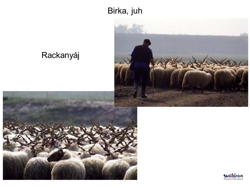 Birka, juh Rackanyáj