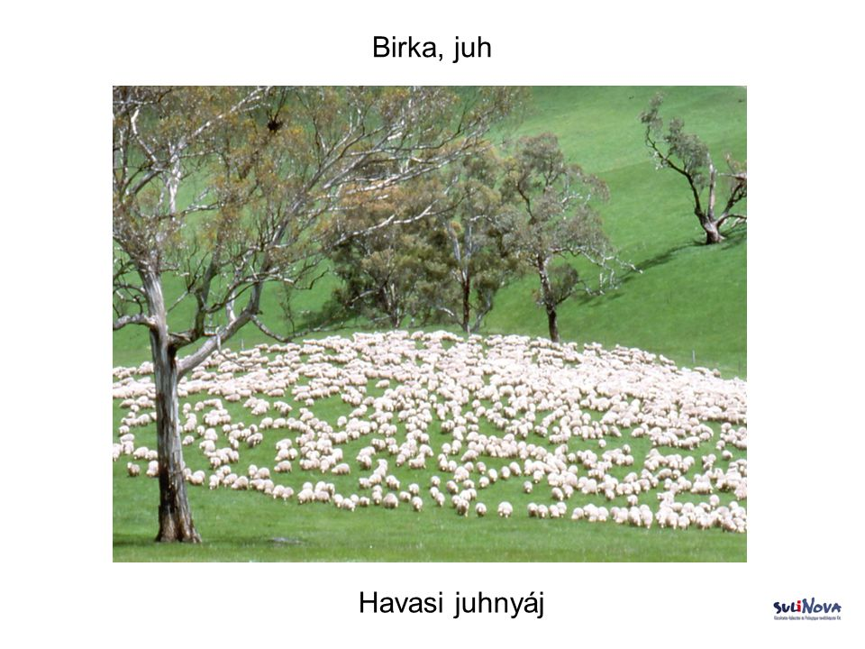 Birka, juh Havasi juhnyáj