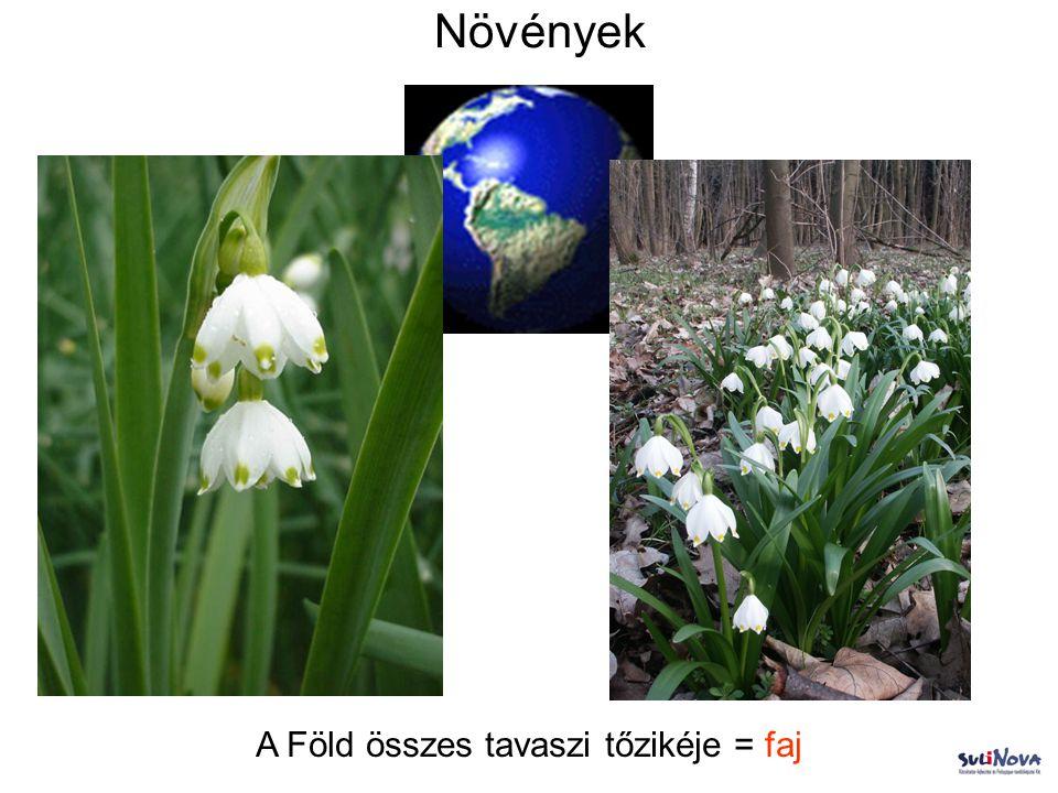 A Föld összes tavaszi tőzikéje = faj