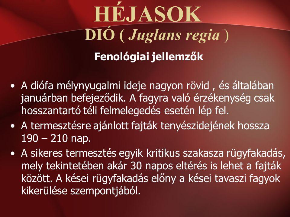 HÉJASOK DIÓ ( Juglans regia ) Fenológiai jellemzők