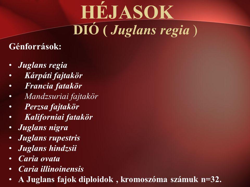 HÉJASOK DIÓ ( Juglans regia ) Génforrások: Juglans regia