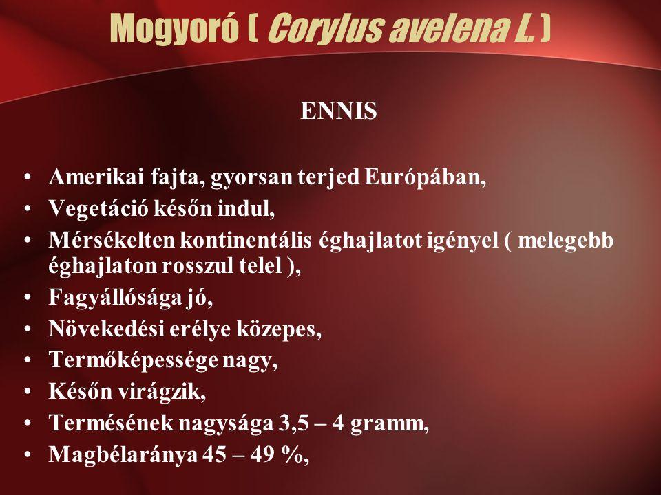 Mogyoró ( Corylus avelena L. )