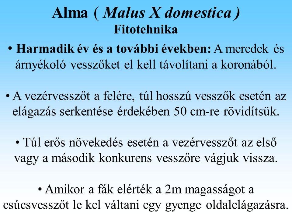 Alma ( Malus X domestica )