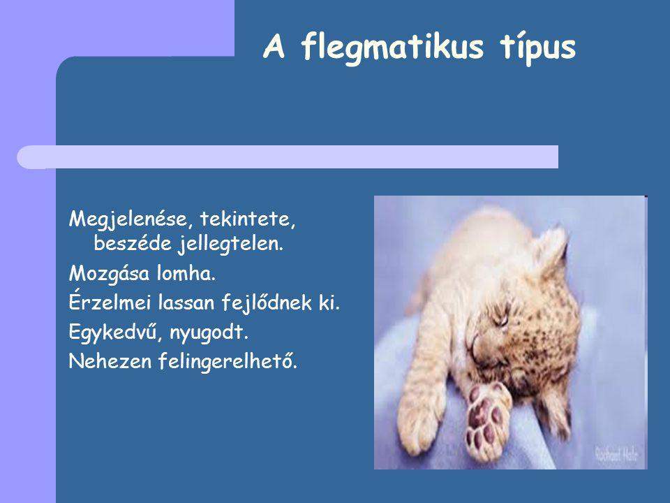 A flegmatikus típus Megjelenése, tekintete, beszéde jellegtelen.