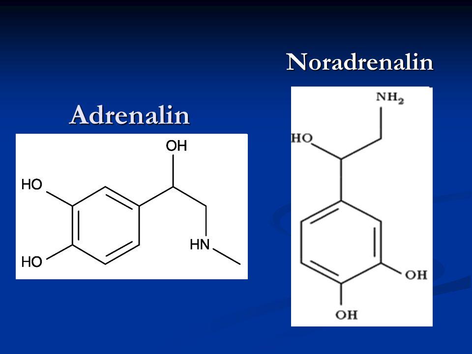Noradrenalin Adrenalin