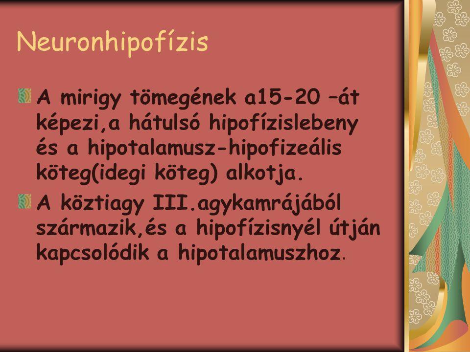 Neuronhipofízis A mirigy tömegének a15-20 –át képezi,a hátulsó hipofízislebeny és a hipotalamusz-hipofizeális köteg(idegi köteg) alkotja.