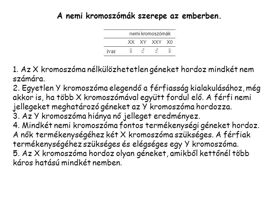 A nemi kromoszómák szerepe az emberben.