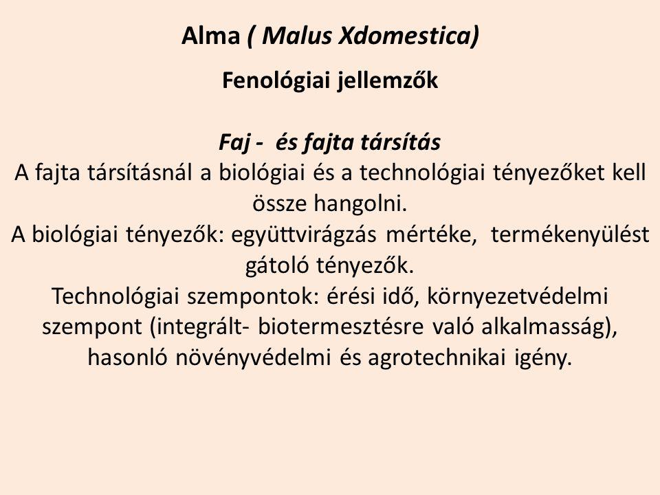 Alma ( Malus Xdomestica)