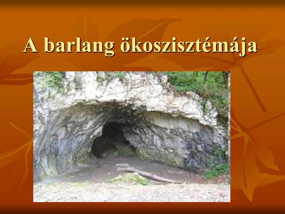 A barlang ökoszisztémája