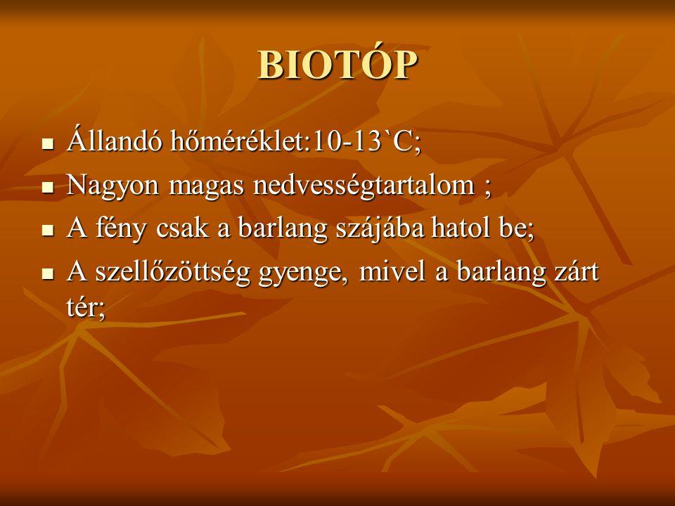BIOTÓP Állandó hőméréklet:10-13`C; Nagyon magas nedvességtartalom ;