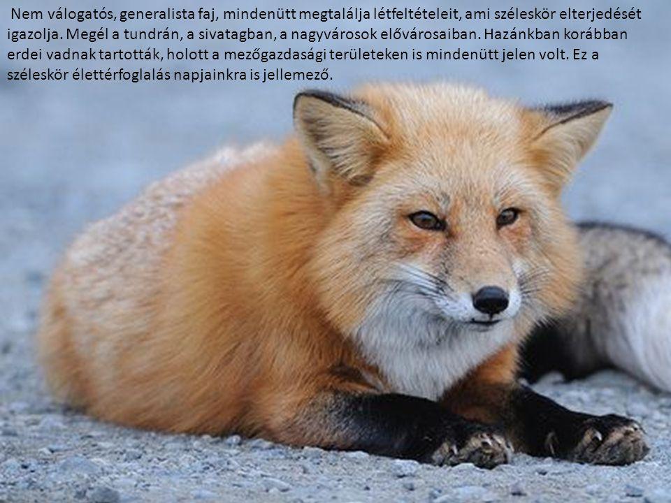 Nem válogatós, generalista faj, mindenütt megtalálja létfeltételeit, ami széleskör elterjedését igazolja.