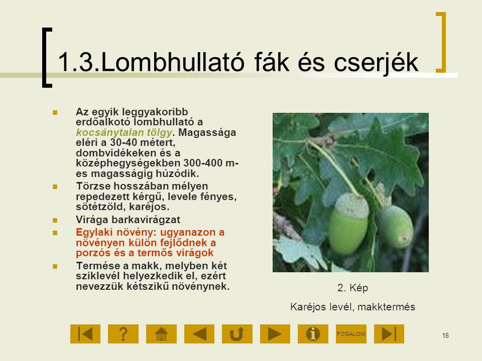 1.3.Lombhullató fák és cserjék