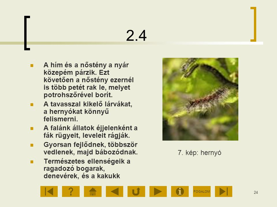 2.4 A hím és a nőstény a nyár közepém párzik. Ezt követően a nőstény ezernél is több petét rak le, melyet potrohszőrével borít.
