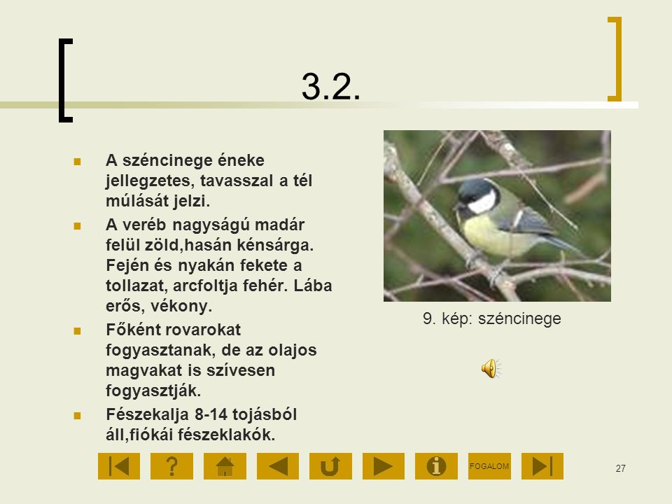 3.2. A széncinege éneke jellegzetes, tavasszal a tél múlását jelzi.