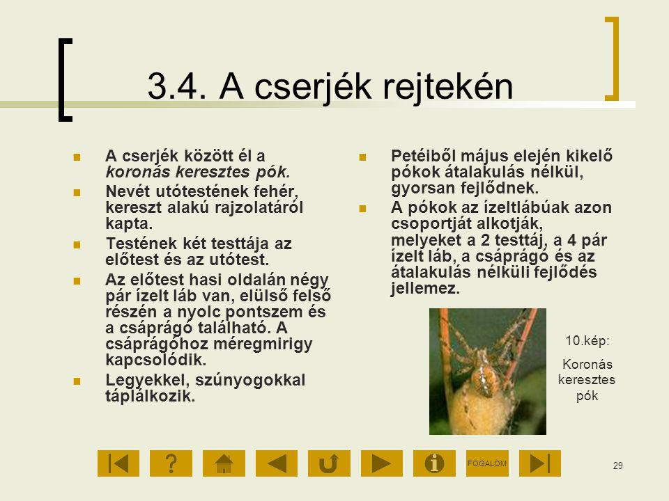 3.4. A cserjék rejtekén A cserjék között él a koronás keresztes pók.