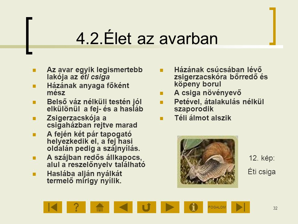 4.2.Élet az avarban Az avar egyik legismertebb lakója az éti csiga