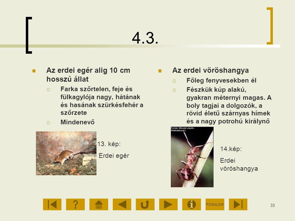 4.3. Az erdei egér alig 10 cm hosszú állat Az erdei vöröshangya