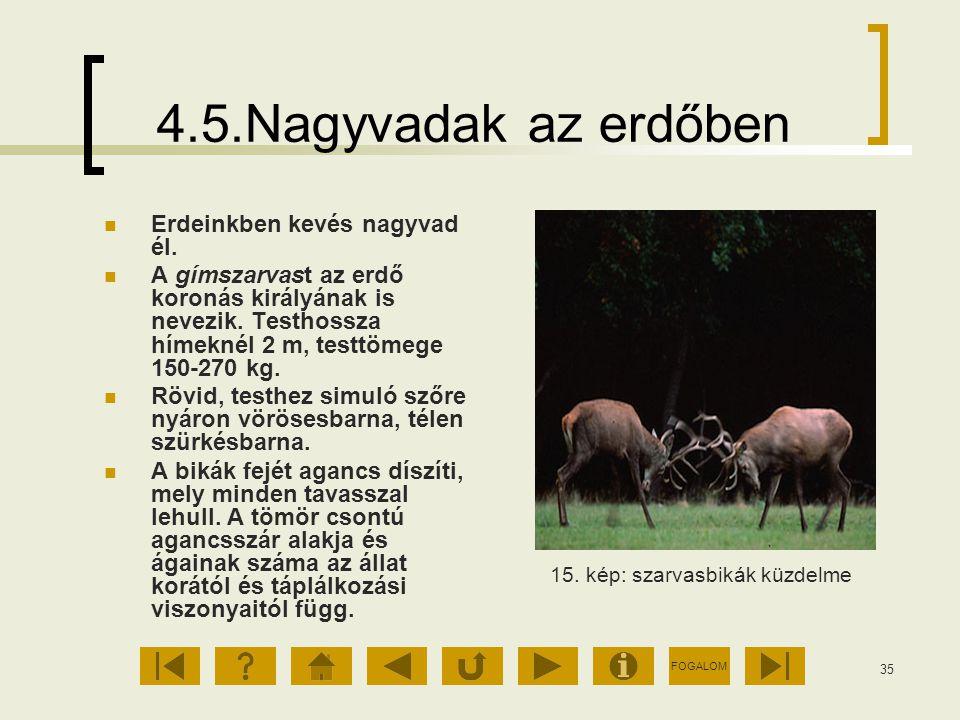 4.5.Nagyvadak az erdőben Erdeinkben kevés nagyvad él.