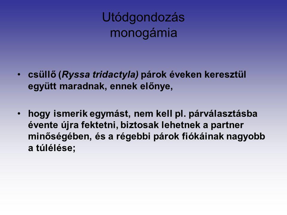 Utódgondozás monogámia