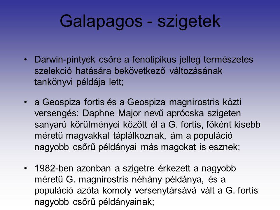 Galapagos - szigetek Darwin-pintyek csőre a fenotipikus jelleg természetes szelekció hatására bekövetkező változásának tankönyvi példája lett;