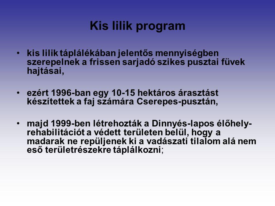 Kis lilik program kis lilik táplálékában jelentős mennyiségben szerepelnek a frissen sarjadó szikes pusztai füvek hajtásai,