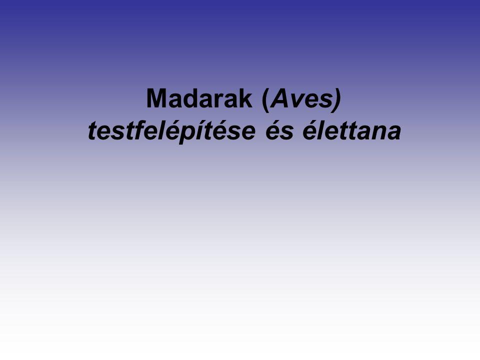 Madarak (Aves) testfelépítése és élettana