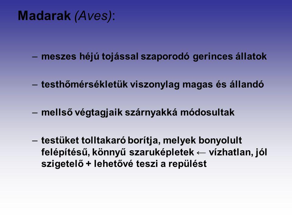 Madarak (Aves): meszes héjú tojással szaporodó gerinces állatok