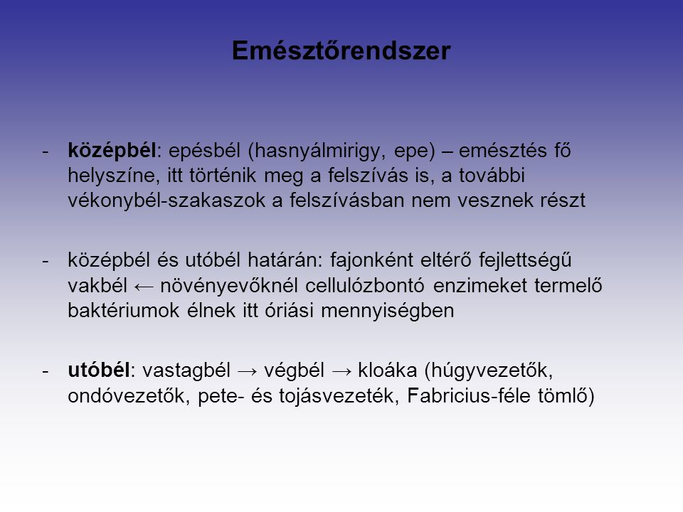 Emésztőrendszer