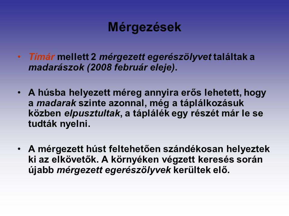 Mérgezések Tímár mellett 2 mérgezett egerészölyvet találtak a madarászok (2008 február eleje).