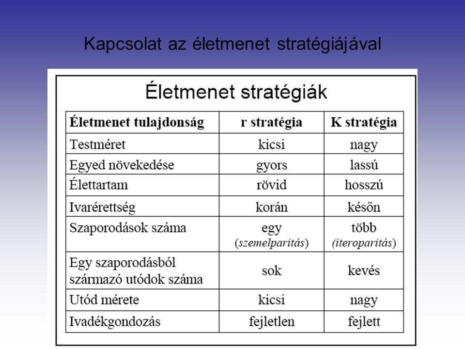Kapcsolat az életmenet stratégiájával