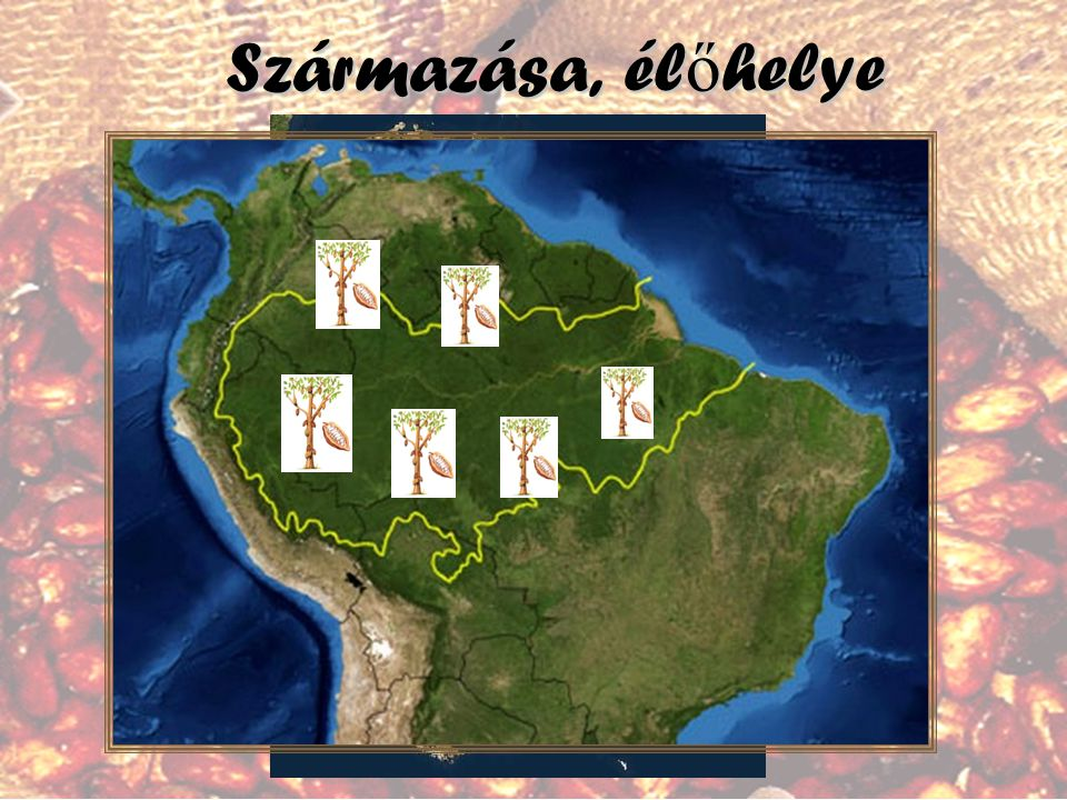 Származása, élőhelye A kakaó Dél-Amerika esőerdőiből, főként az Amazonas és Orinoco folyók ártereiről származik.