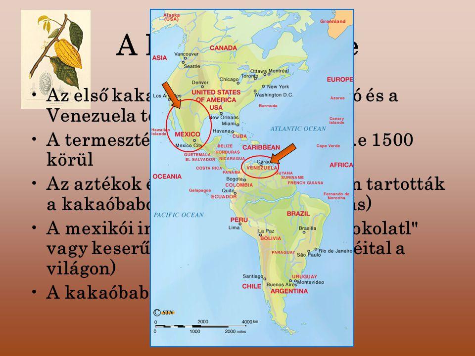 A kakaó története Az első kakaófa ültetvények- Mexikó és a Venezuela területén. A termesztését a maják kezdték el i.e 1500 körül.