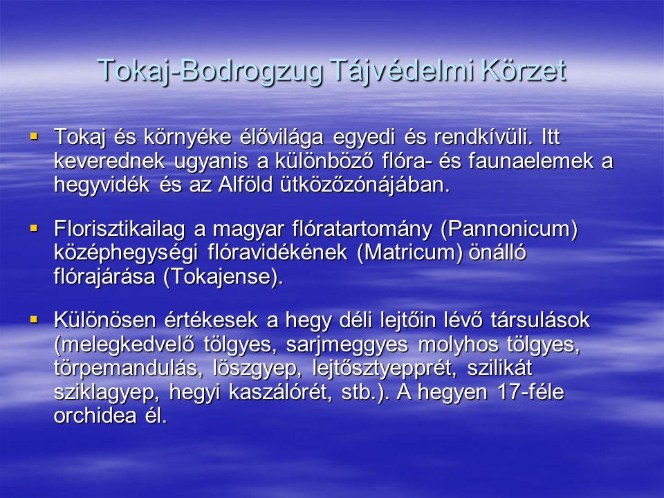 Tokaj-Bodrogzug Tájvédelmi Körzet