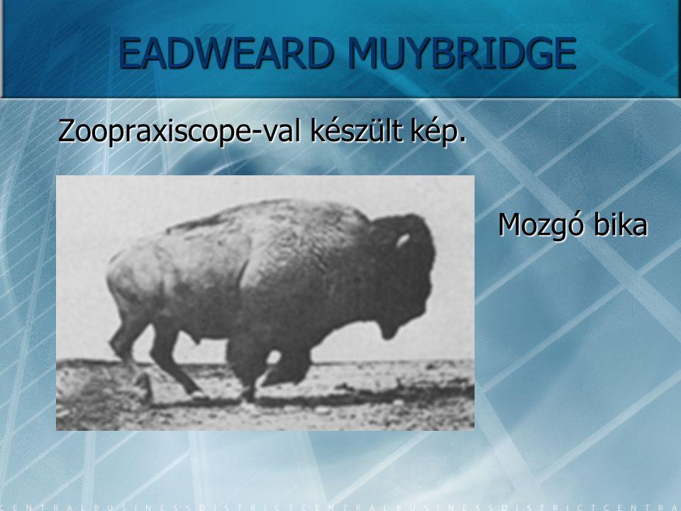 EADWEARD MUYBRIDGE Zoopraxiscope-val készült kép. Mozgó bika