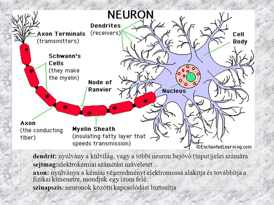 dendrit: nyúlvány a külvilág, vagy a többi neuron bejövő (input)jelei számára