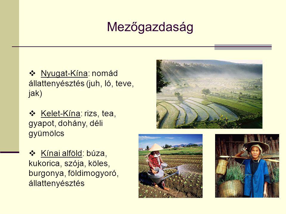Mezőgazdaság Nyugat-Kína: nomád állattenyésztés (juh, ló, teve, jak)