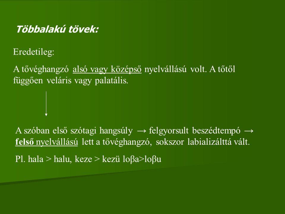 Többalakú tövek: Eredetileg: A tővéghangzó alsó vagy középső nyelvállású volt. A tőtől függően veláris vagy palatális.