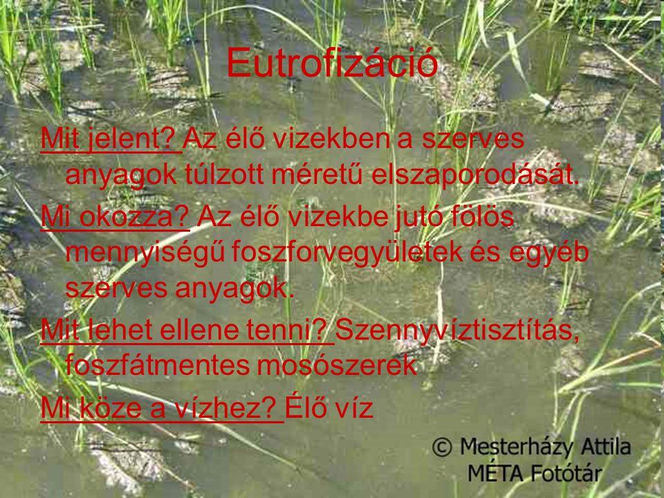 Eutrofizáció Mit jelent Az élő vizekben a szerves anyagok túlzott méretű elszaporodását.