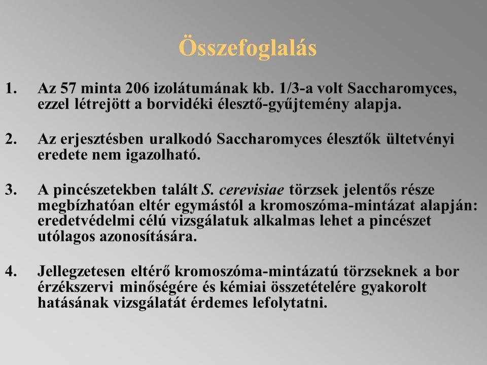 Összefoglalás Az 57 minta 206 izolátumának kb. 1/3-a volt Saccharomyces, ezzel létrejött a borvidéki élesztő-gyűjtemény alapja.