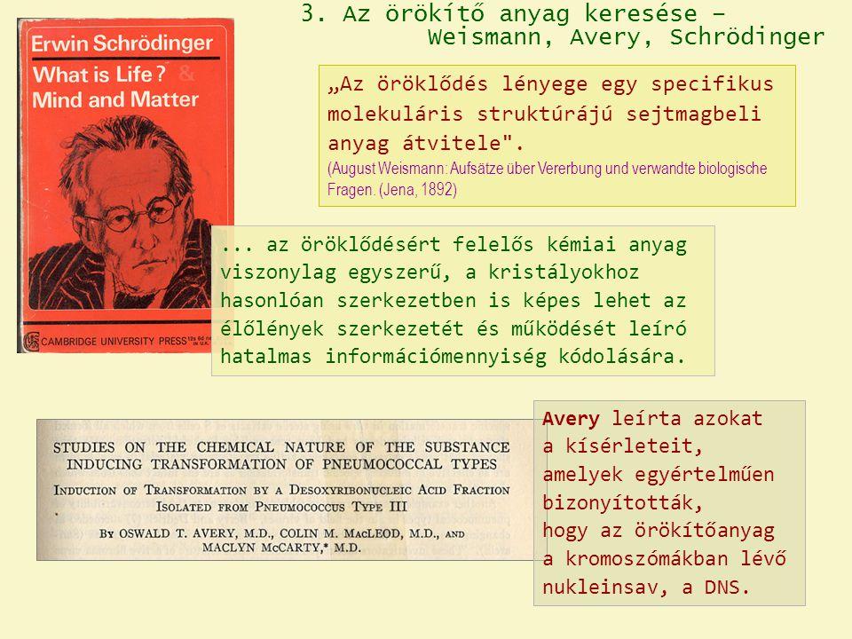 3. Az örökítő anyag keresése – Weismann, Avery, Schrödinger