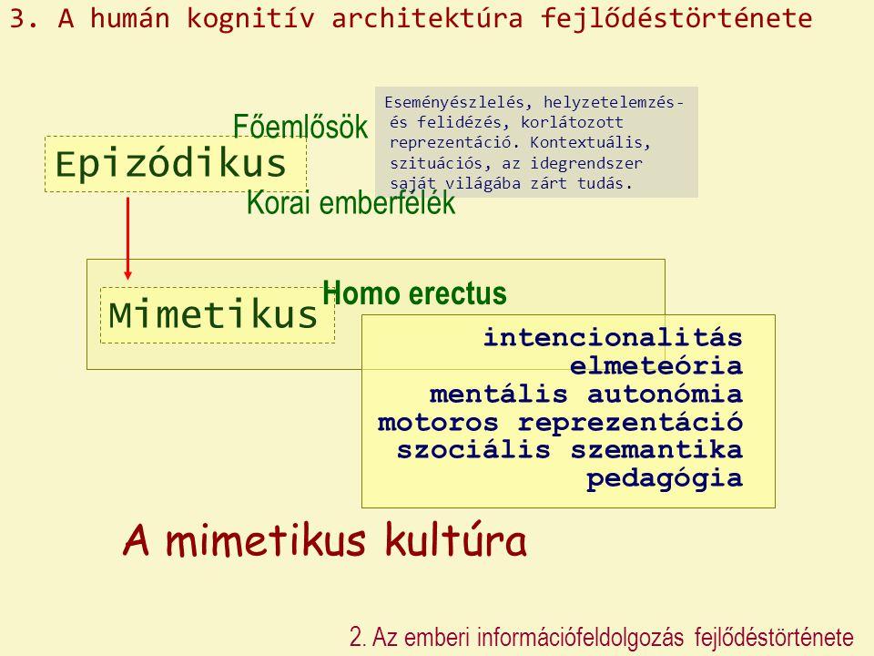 A mimetikus kultúra Epizódikus Mimetikus Főemlősök Korai emberfélék