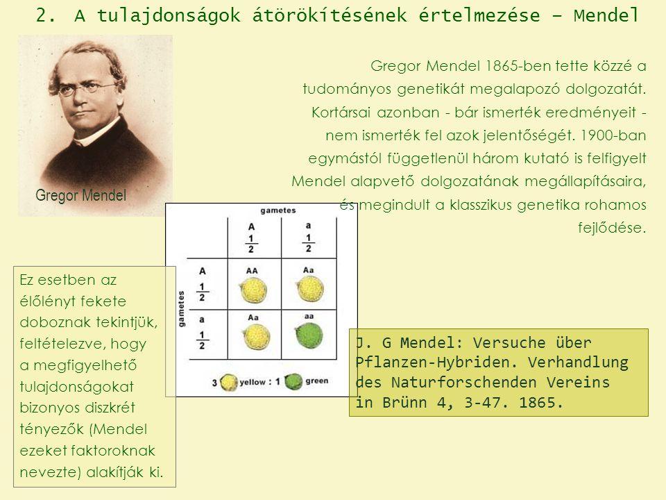A tulajdonságok átörökítésének értelmezése – Mendel