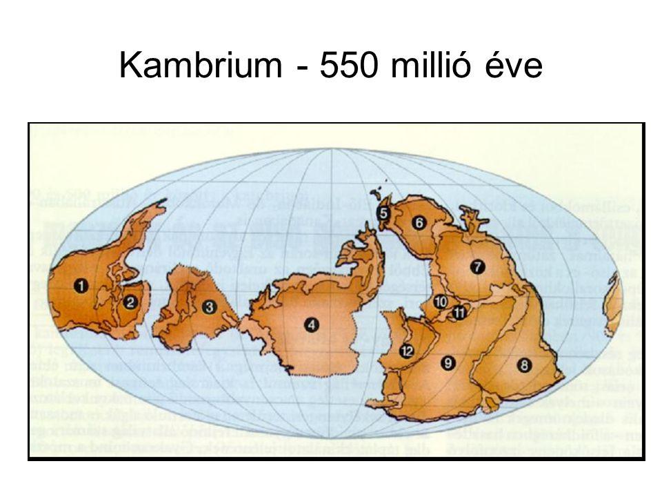 Kambrium - 550 millió éve