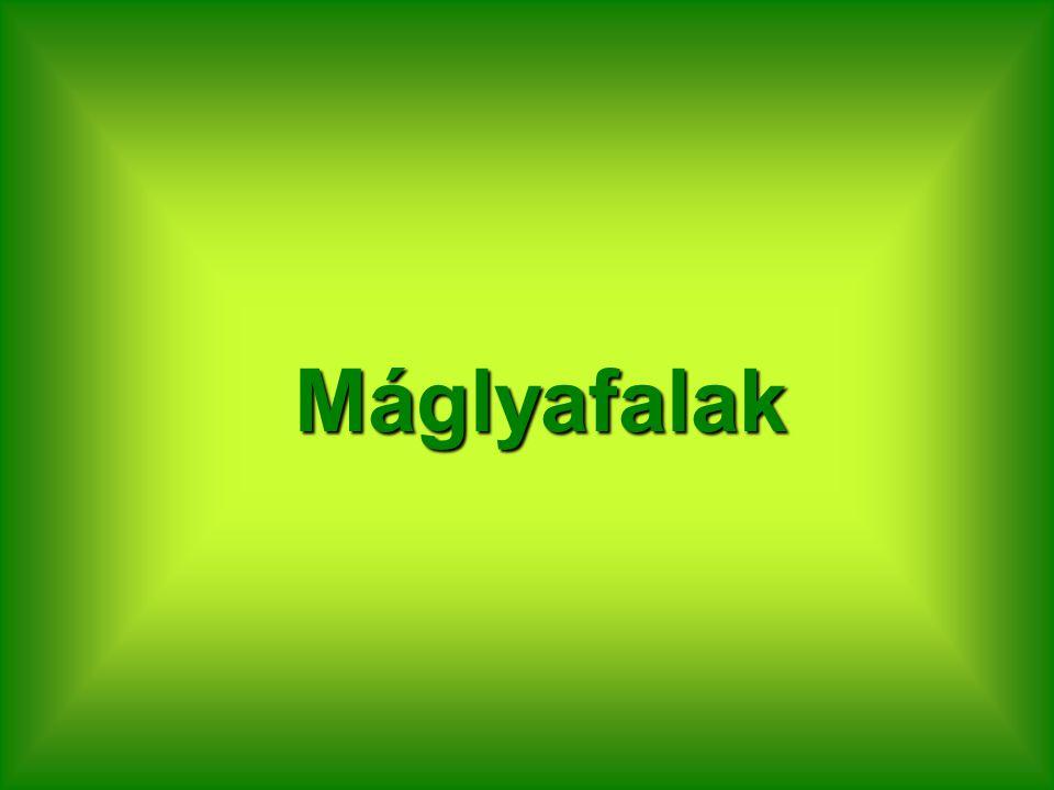 Máglyafalak