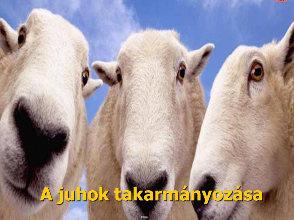 A juhok takarmányozása